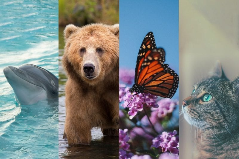 Which Is Your Travel Spirit Animal Take This Quiz To Find Out
