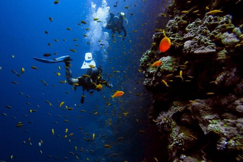Scuba Diving In Pondicherry A Complete Guide